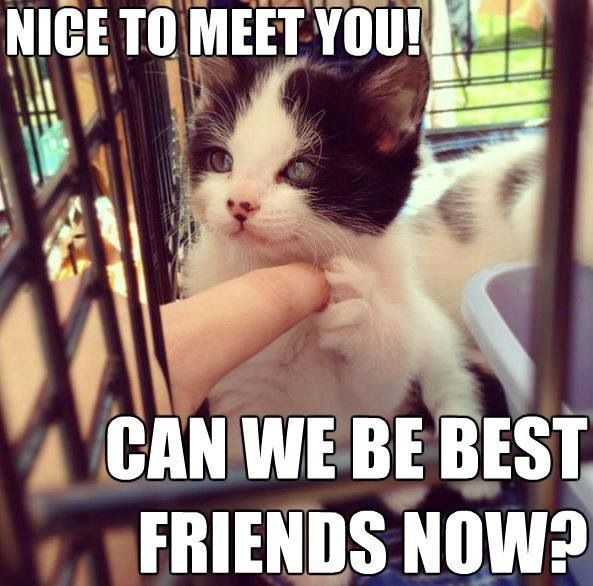 Image result for can we be friends now?